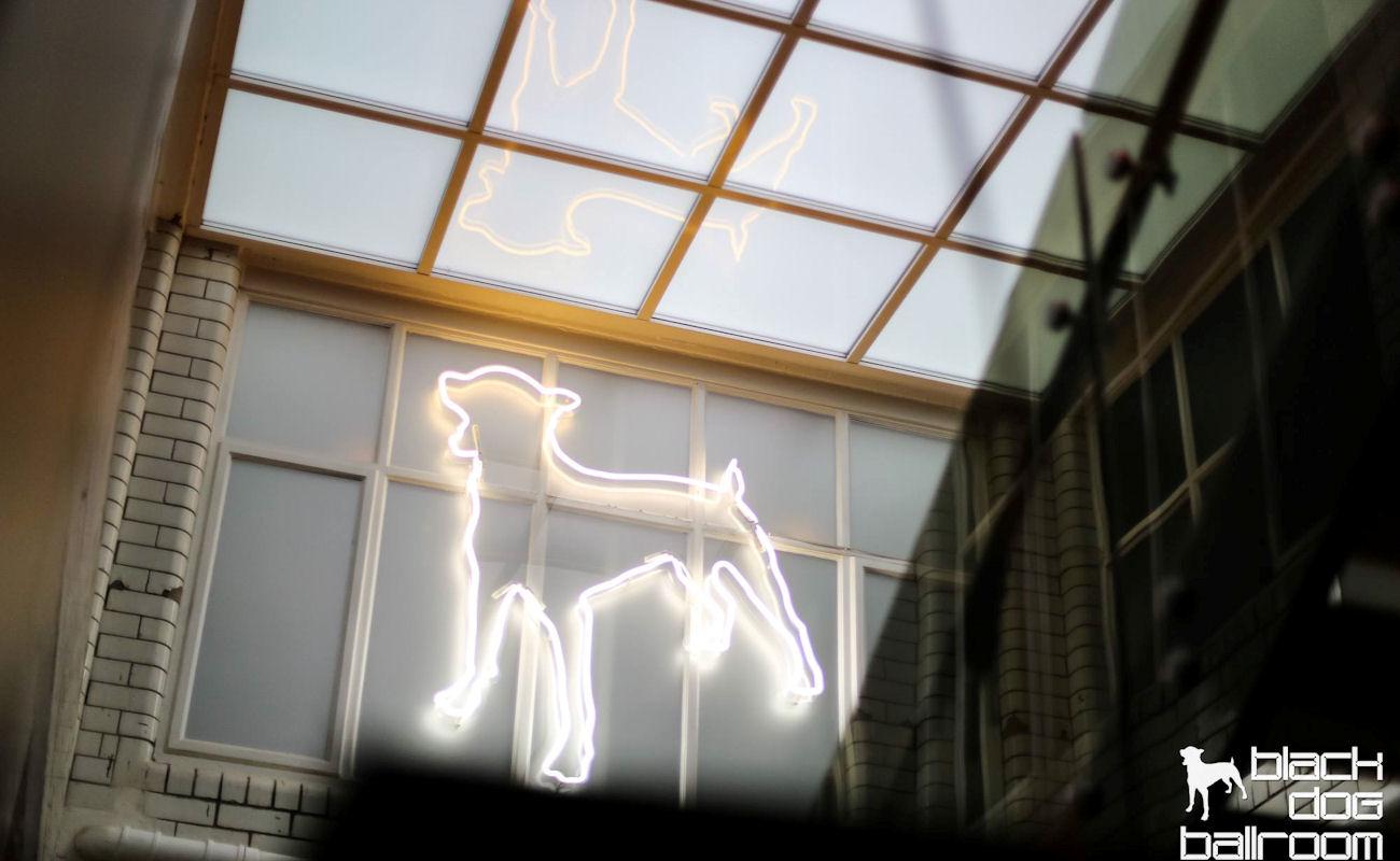 Black Dog NWS Manchester