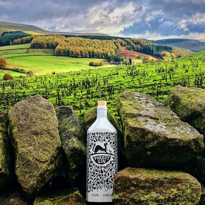 Forest Gin Macclesfield